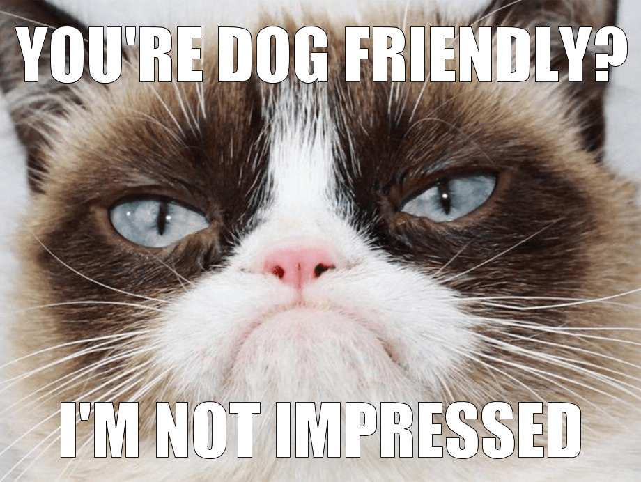 Grumpycat-Unimpressed